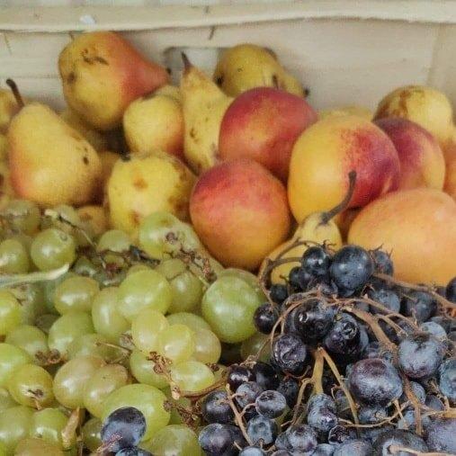 Fruits SurpreNantes